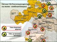 На полях Южного Урала активизировался «хлебный оккупант»